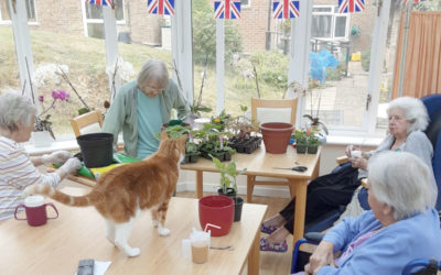 Planting pots and enjoying music at Loose Valley Care Home