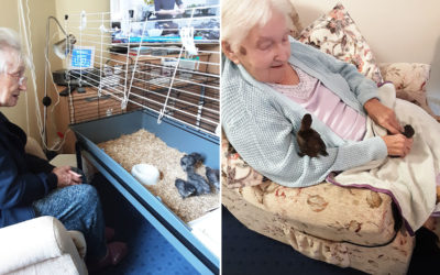 New feathered friends at Loose Valley Care Home