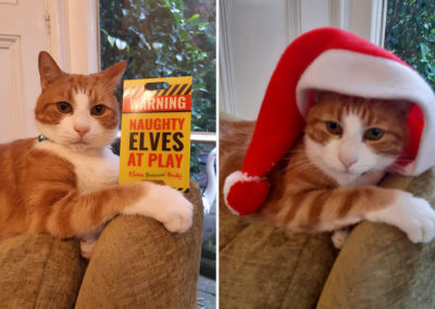 Loose Valley Care Home cat wearing a Santa hat