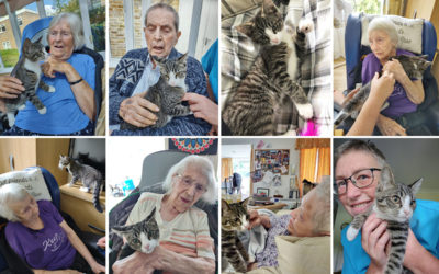 Resident and staff enjoying cuddles with Lola the kitten at Loose Valley Care Home