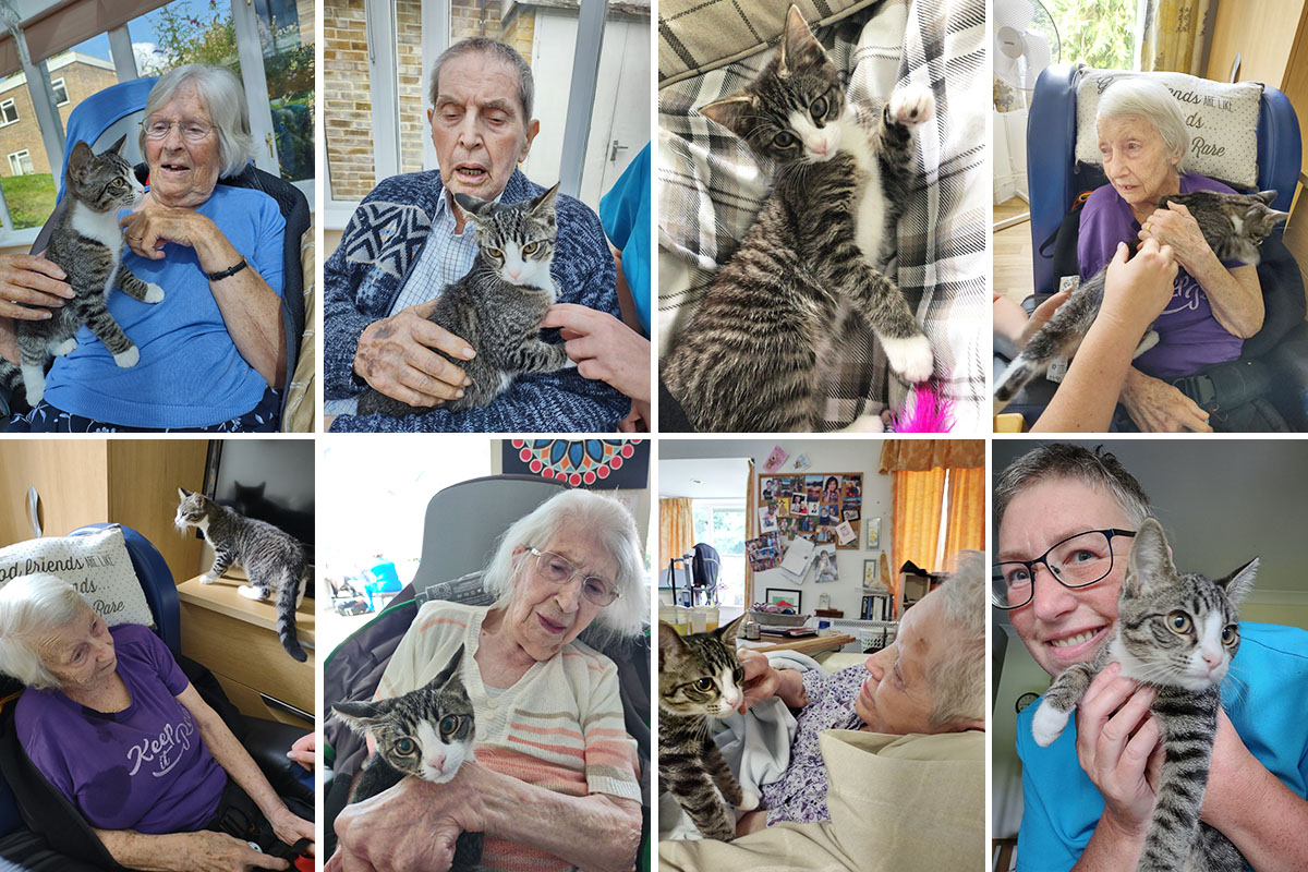 Kitten cuddles with Lola at Loose Valley Care Home